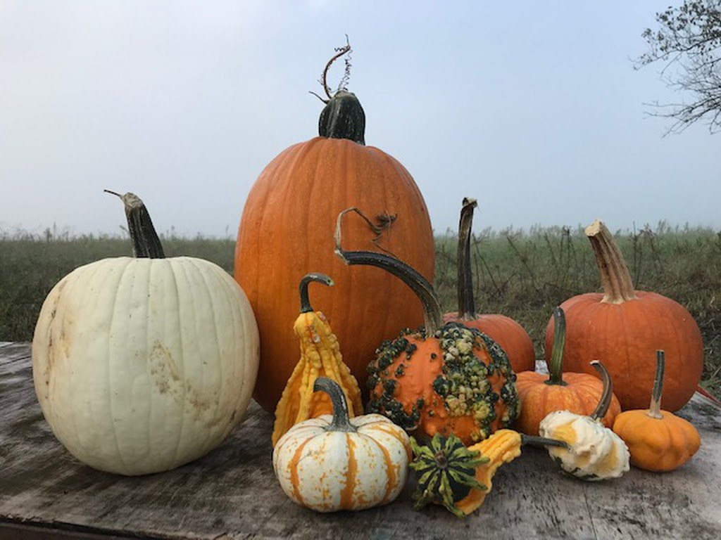 New: Pumpkins, Squash, and Gourds!