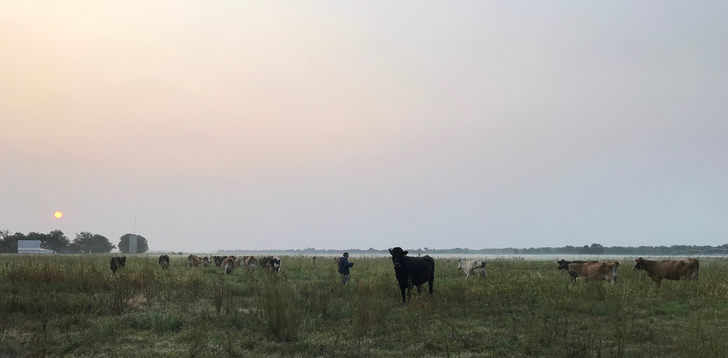 Moooving into fall. An update from the cows.